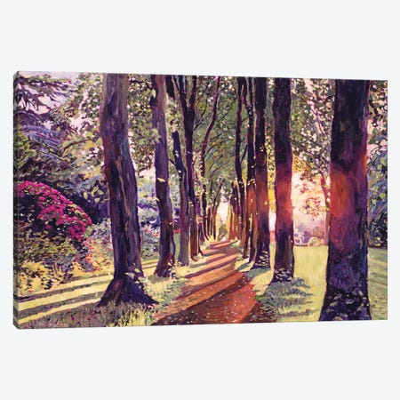 A Walk In The Forest Canvas Print #DLG7} by David Lloyd Glover Canvas Art