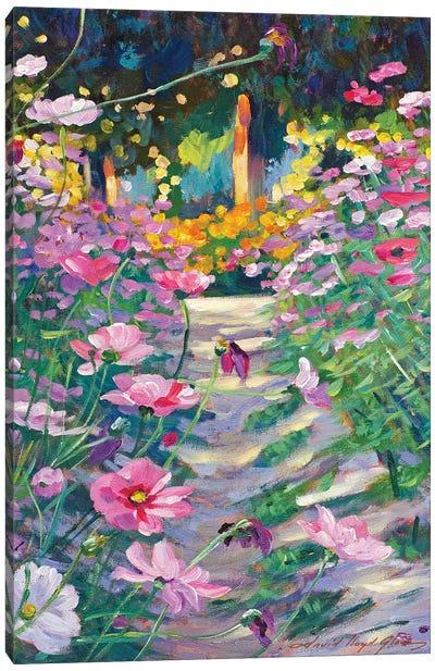 Garden Path Of Cosmos Canvas Art Print