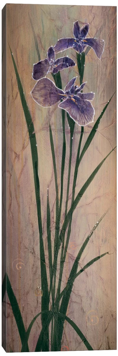 Iris Panel I Canvas Art Print