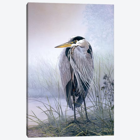 Brooding Heron Canvas Print #DLL125} by Don Li-Leger Canvas Artwork