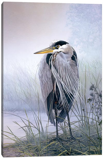 Brooding Heron Canvas Art Print