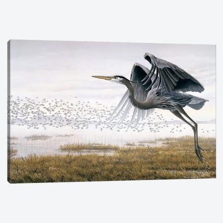 Heron Sandpipers Canvas Print #DLL126} by Don Li-Leger Canvas Wall Art