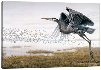 Heron Sandpipers Canvas Art Print