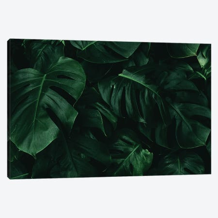 Leaf Green I Canvas Print #DLX78} by Danilo de Alexandria Canvas Artwork