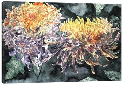 Chrysanthemum Flowers I Canvas Art Print