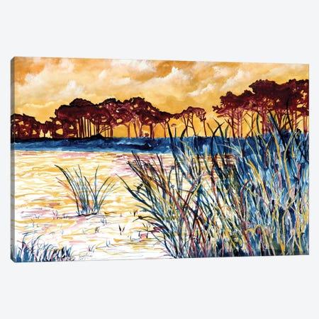 Coastal Pines Canvas Print #DMC22} by Derek McCrea Art Print