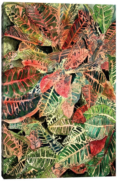 Croton Botanical Canvas Art Print