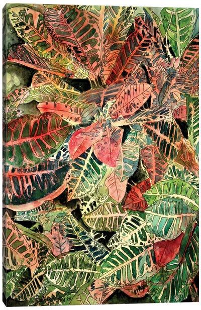 Croton Botanical Canvas Art Print
