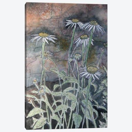 Daisy Flowers Canvas Print #DMC28} by Derek McCrea Canvas Art Print