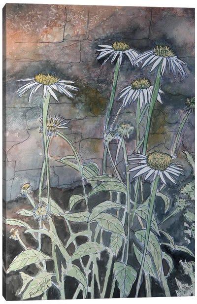 Daisy Flowers Canvas Art Print
