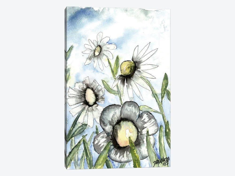 Field Of White Daisies by Derek McCrea 1-piece Canvas Wall Art