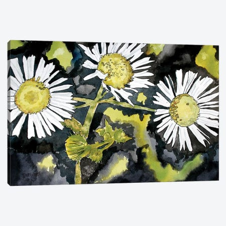 Heath Aster Flowers Canvas Print #DMC39} by Derek McCrea Canvas Artwork