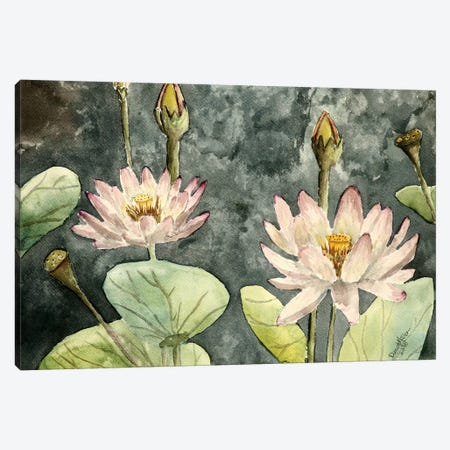 Lotus Flowers Canvas Print #DMC49} by Derek McCrea Canvas Print