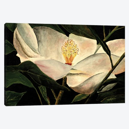 Magnolia Flower Canvas Print #DMC50} by Derek McCrea Canvas Art