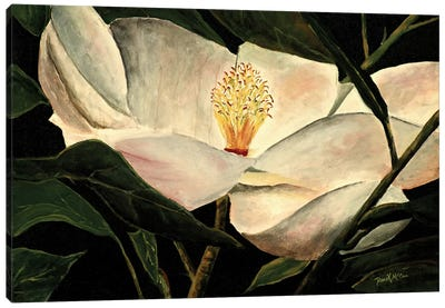 Magnolia Flower Canvas Art Print