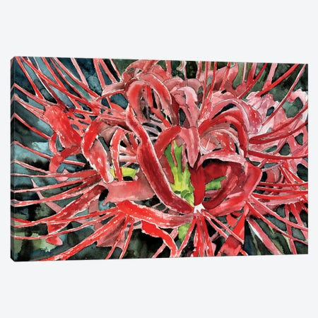 Red Spider Lily Flower Canvas Print #DMC64} by Derek McCrea Canvas Art