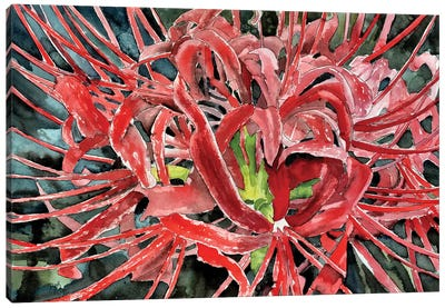 Red Spider Lily Flower Canvas Art Print
