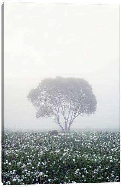 Lonely Tree Canvas Art Print