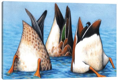 Duck Butts Canvas Art Print