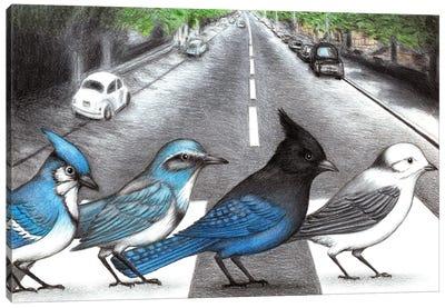 Jay Walking Canvas Art Print