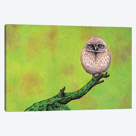 Owl On A Limb Canvas Print #DMH64} by Don McMahon Art Print