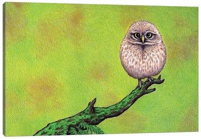 Owl On A Limb Canvas Art Print