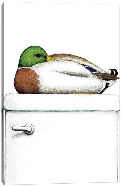 Peeking Duck Canvas Art Print