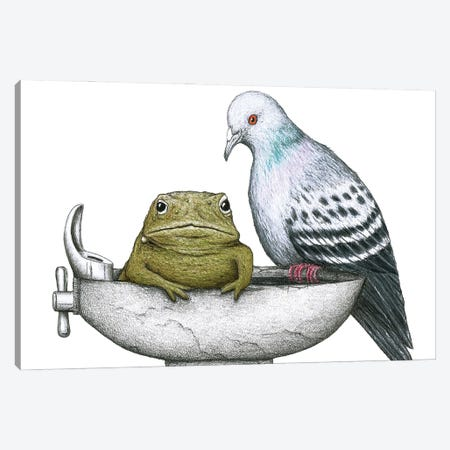 Pigeon Toad Canvas Print #DMH72} by Don McMahon Art Print