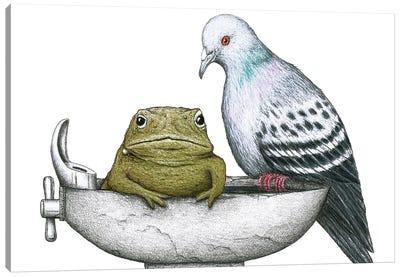 Pigeon Toad Canvas Art Print