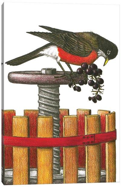 Robin A Treat Canvas Art Print