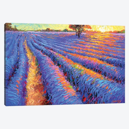 Evening Lavender Field Canvas Print #DMT62} by Dmitry Spiros Canvas Artwork