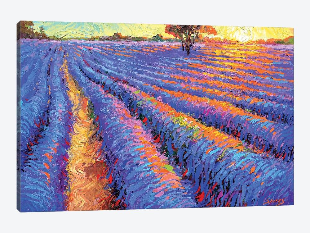 Evening Lavender Field by Dmitry Spiros 1-piece Canvas Wall Art