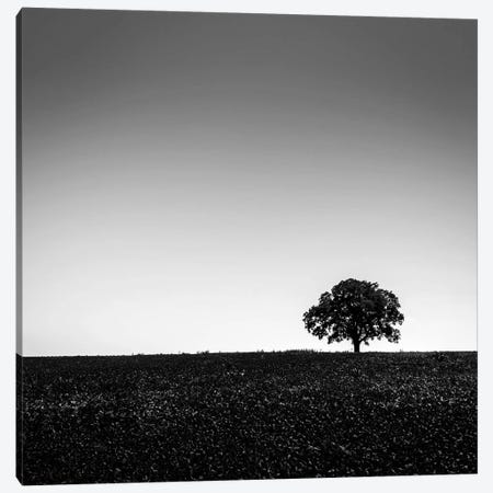 One Tree Hill Canvas Print #DMV23} by Dave MacVicar Canvas Wall Art