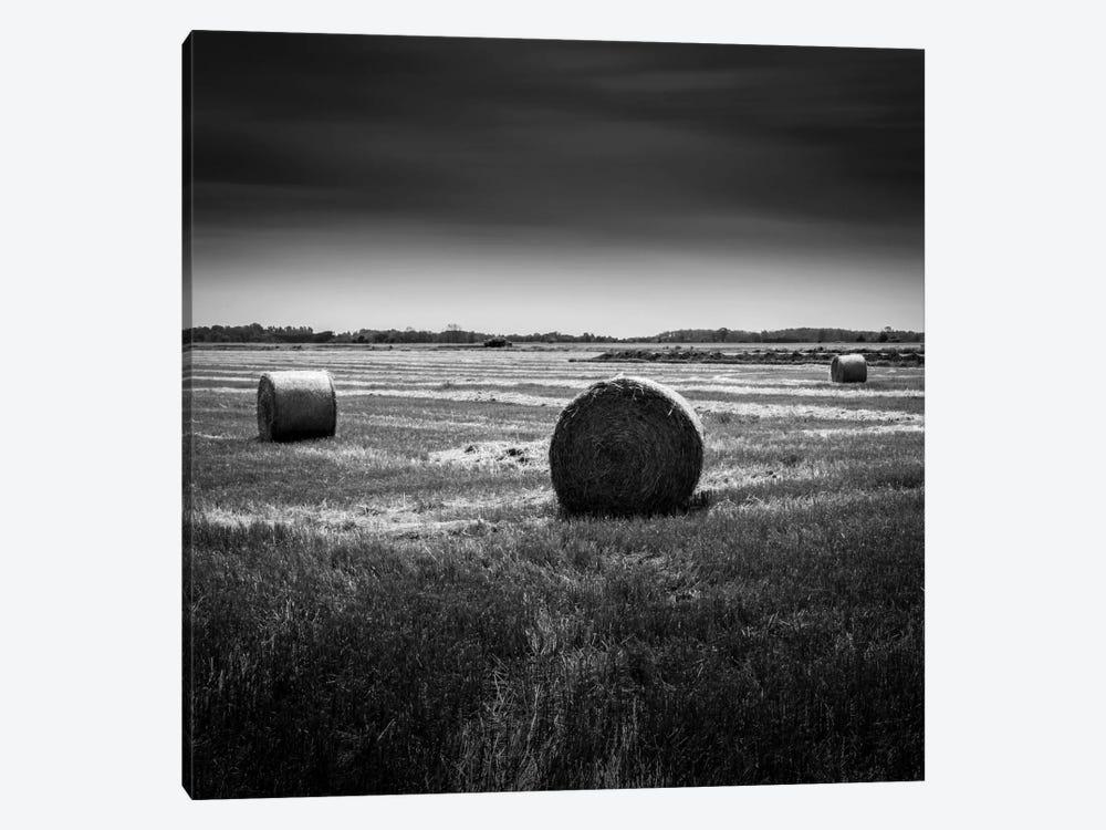 Rural by Dave MacVicar 1-piece Canvas Art Print