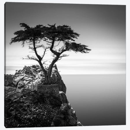 The Lone Cypress Canvas Print #DMV2} by Dave MacVicar Canvas Artwork