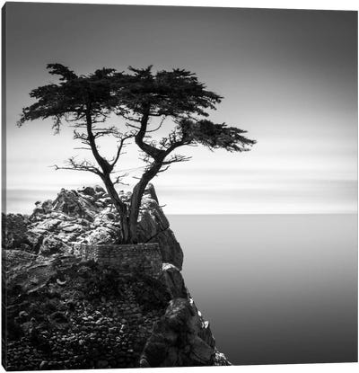 The Lone Cypress Canvas Art Print