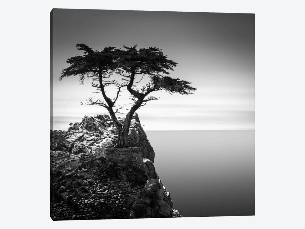 The Lone Cypress by Dave MacVicar 1-piece Canvas Wall Art