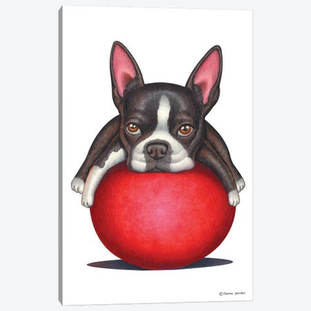 Boston Terrier Canvas Print #DNG11} by Danny Gordon Canvas Art