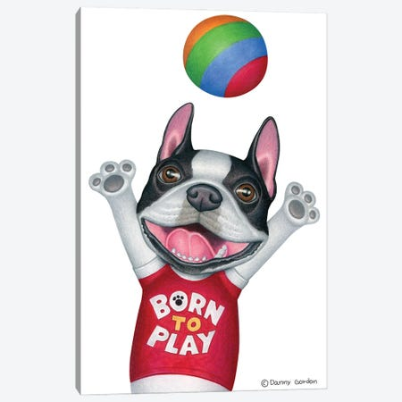 Boston Terrier With Ball Canvas Print #DNG156} by Danny Gordon Canvas Art