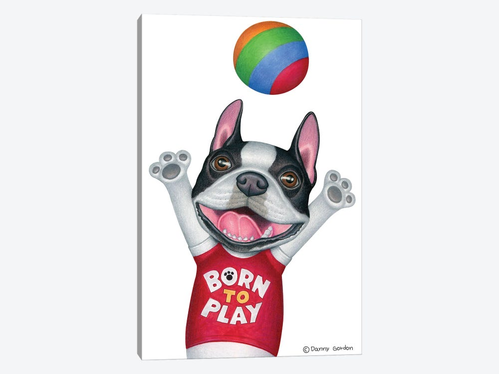 Boston Terrier With Ball by Danny Gordon 1-piece Canvas Art