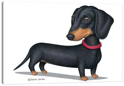 Black Dachshund Red Collar Canvas Art Print