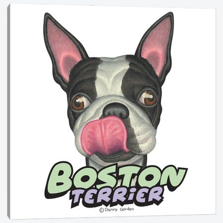 Boston Terrier Licking Lips Canvas Print #DNG184} by Danny Gordon Art Print