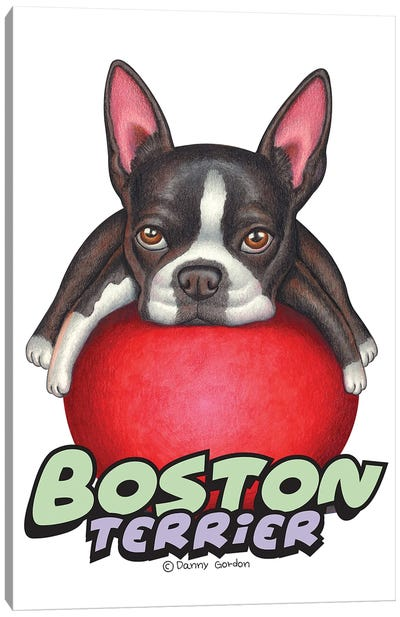 Boston Terrier Red Ball Canvas Art Print