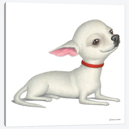 Chihuahua White Canvas Print #DNG33} by Danny Gordon Canvas Artwork