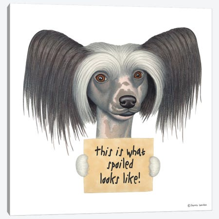 Chinese Crested Canvas Print #DNG34} by Danny Gordon Art Print