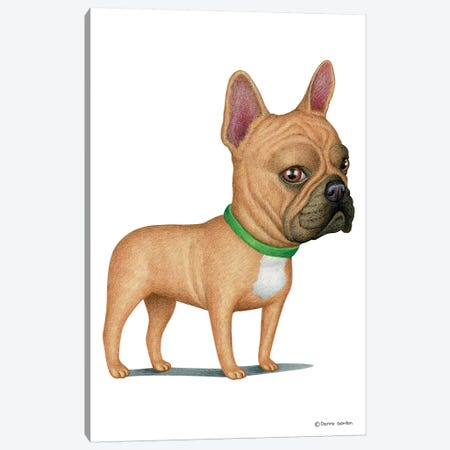French Bulldog Tan Canvas Print #DNG67} by Danny Gordon Canvas Wall Art