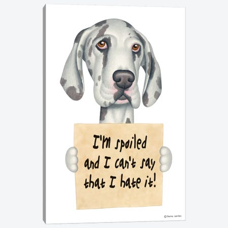 Great Dane I'm Spoiled Canvas Print #DNG69} by Danny Gordon Canvas Print