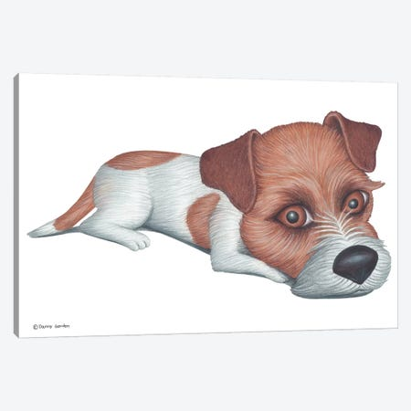 Jack Russell Terrier Canvas Print #DNG73} by Danny Gordon Canvas Wall Art