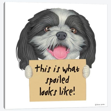 Shih Tzu Spoiled Looks Like Canvas Print #DNG95} by Danny Gordon Canvas Print