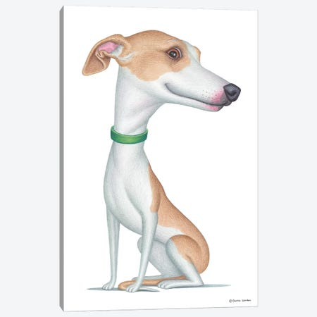 Whippet Canvas Print #DNG98} by Danny Gordon Canvas Artwork